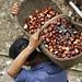 Harvesting chestnuts