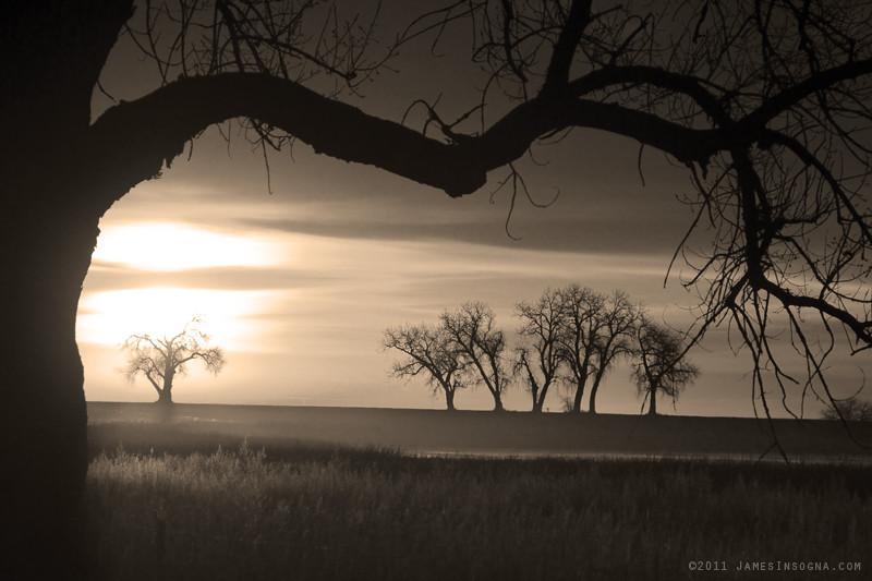 Trees And Meadows Sepia Sunrise Sepia Sunrise 2 18 2011