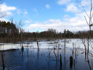 Swamp on Rte 16, high water | by Genny164