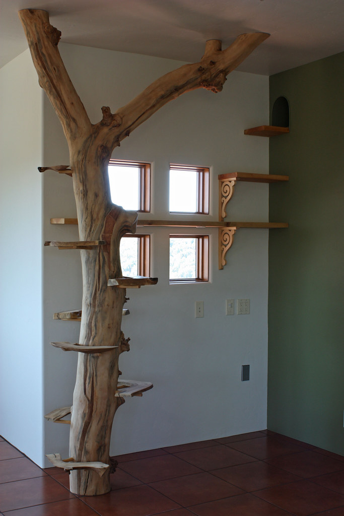 Cat tree and walkway in sally 39 s studio another local - Escalier pour chat ...