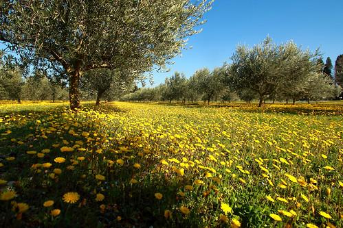 Le printemps est inexorable p neruda flickr photo for Semer le gazon au printemps