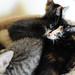 Lizzy's kitties updated pix