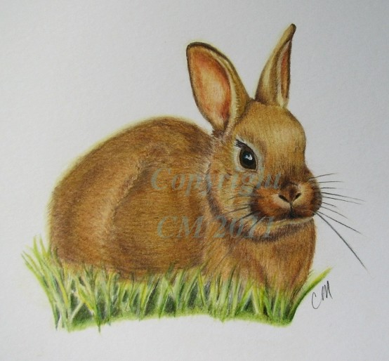Baby Bunny Colour Pencil Drawing