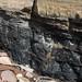 Coal seam east of Crail in Fife, Scotland.
