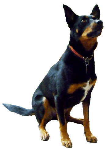 Image Result For My Dog Has