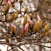 Spring Buds in the Haupt Garden