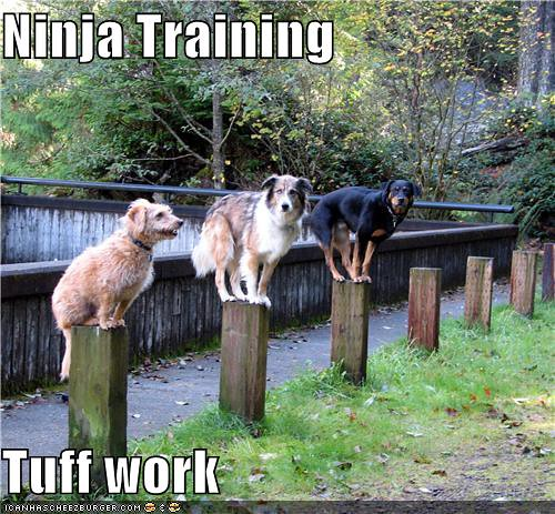 Dog Ninja Training We Cats Decided To Allow Some Dogs In