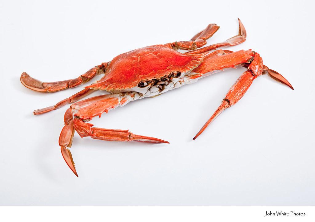 Crab on white background | Sand crab on white background ...