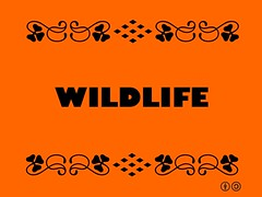 Buzzword Bingo: Wildlife = non-domesticated plants and animals