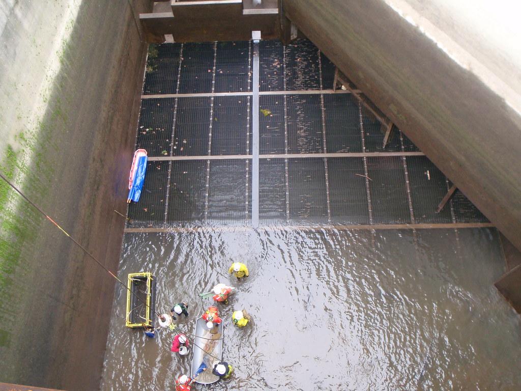 Bonneville dam sturgeon removal p1252580 bonneville dam for Bonneville dam fish camera
