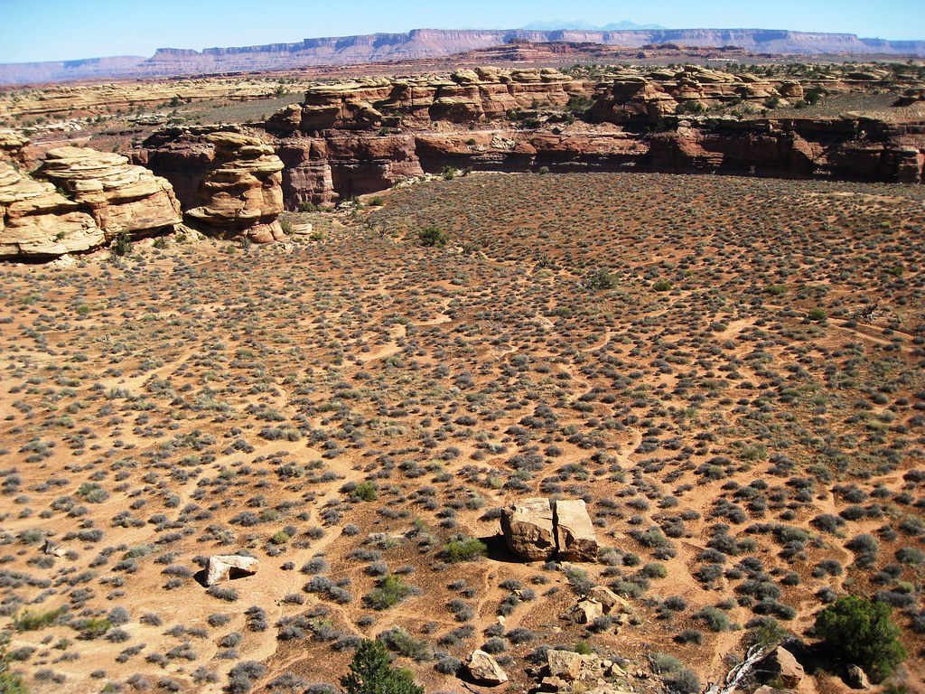 Microphytic soil crusts and desert ecosystems essay
