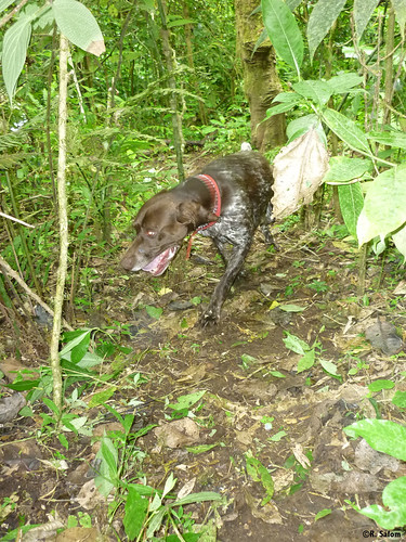 Google searching for jaguar scat | by Panthera Cats