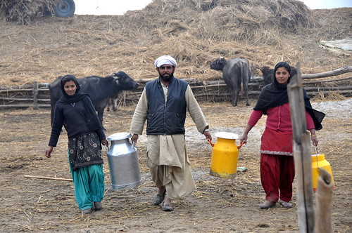 Dairy Farming in Punjab Dairy Farming Family