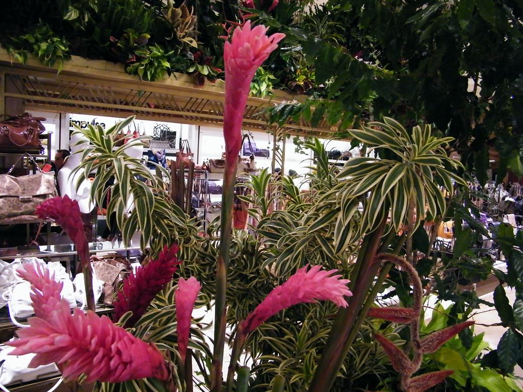 Macys Flower Show New York 2011 Macys Flower Show New Y…