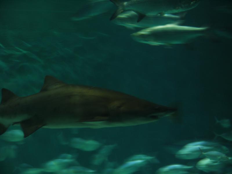 Image Result For Aquarium New Orleans