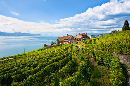 Epesses en Lavaux | by Thierry Hennet