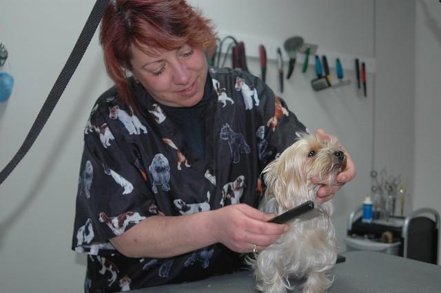 Dog Grooming Watson Road Mo