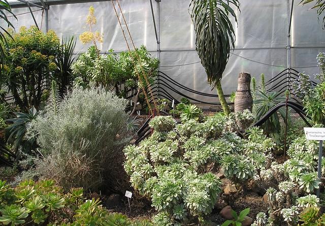 berwinterung der pflanzen berwinterung der pflanzen. Black Bedroom Furniture Sets. Home Design Ideas
