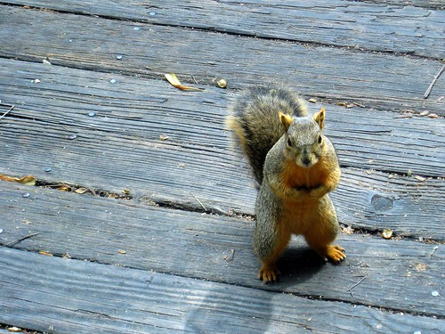 balboa park has very bold squirrels. | by the queen of subtle