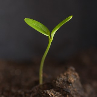 Seedling | by _sjg_
