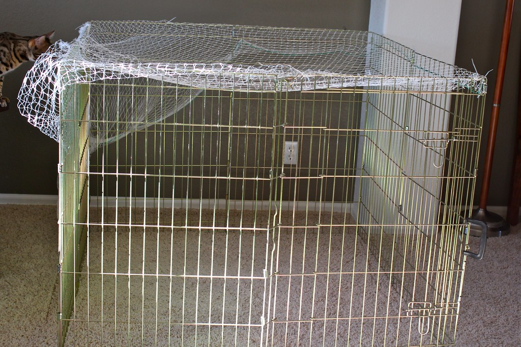 Portable Outdoor Enclosures : Portable outdoor cat enclosure i took an exercise pen