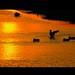 Ducks'Sunset