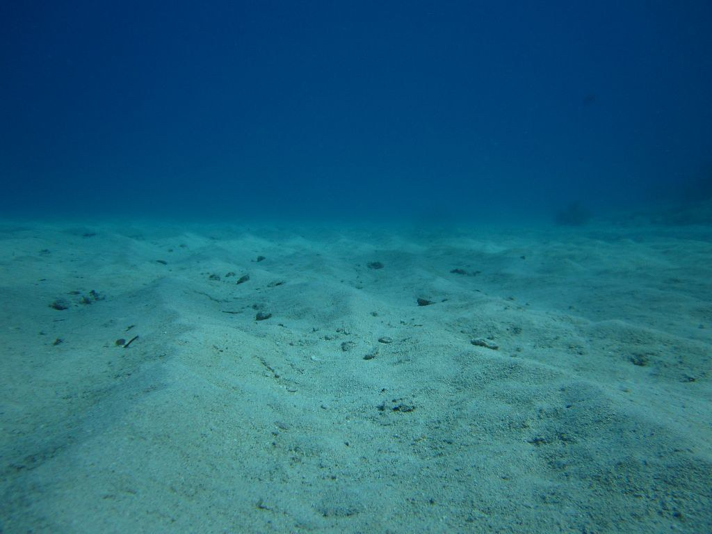 Sand Sea Bed South Beach Florida Diving Did You Ever