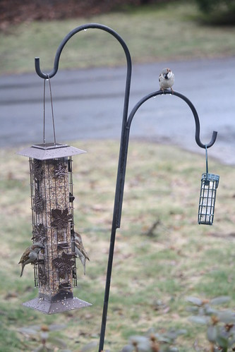 new feeder | by osvchic