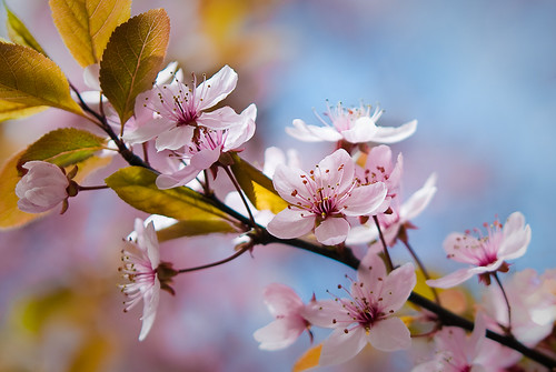 ....the joy of Spring | by bealla