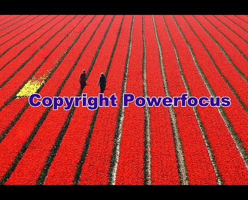 Lost in an Ocean of red....gives their Work colour | by powerfocusfotografie