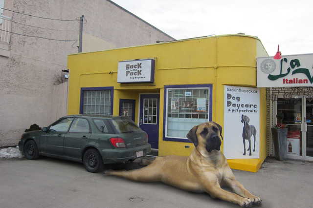 Biggest Dog In The World Flickr Photo Sharing