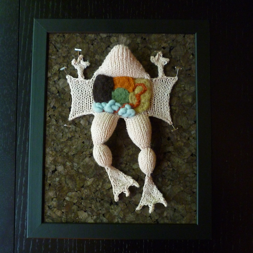 Knitted albino frog dissection | www.aKNITomy.etsy.com | Flickr