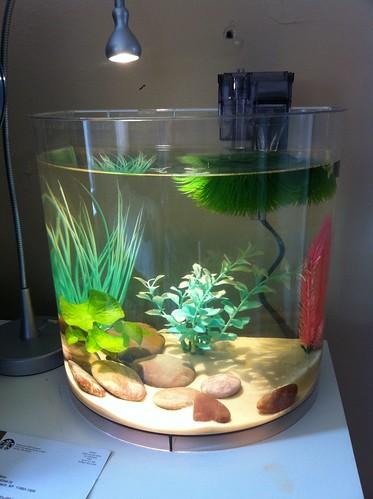 3 5 gallon acrylic betta tank no fish yet fake plants for 5 gallon betta fish tank
