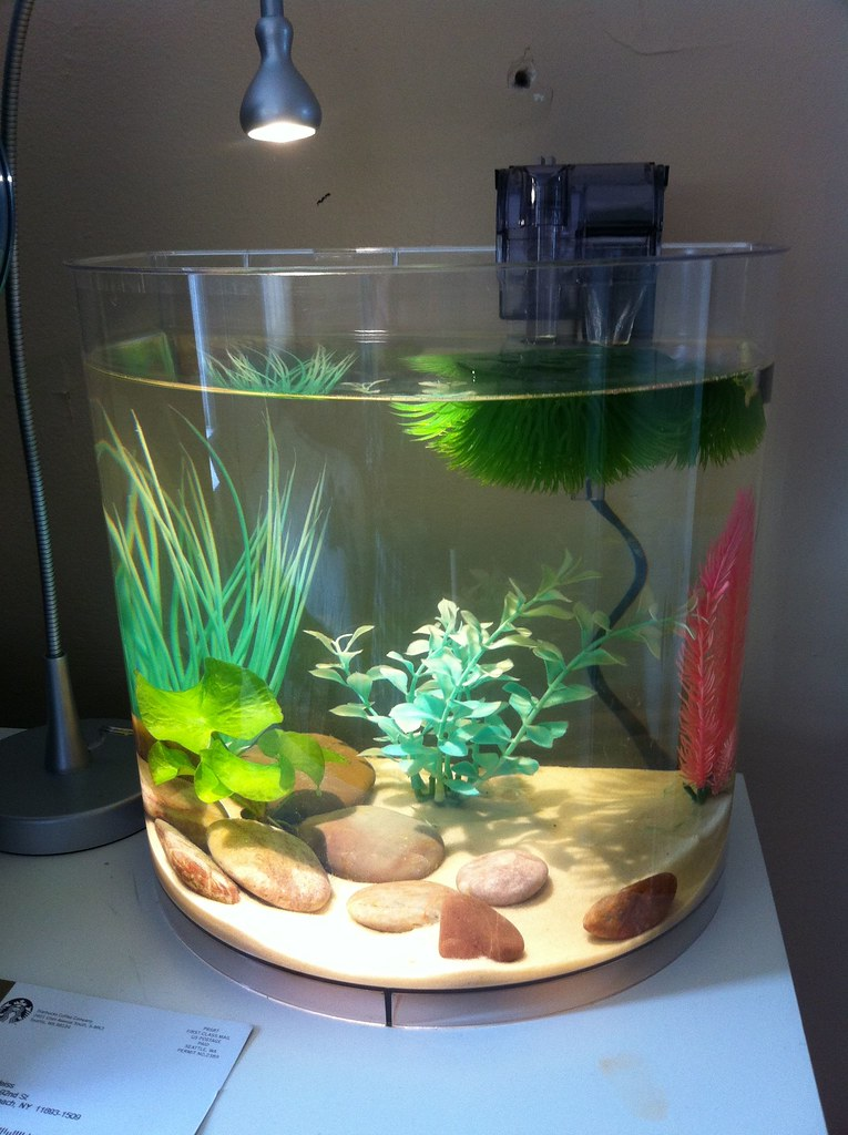 3 5 gallon tank images for Fish for a 5 gallon tank
