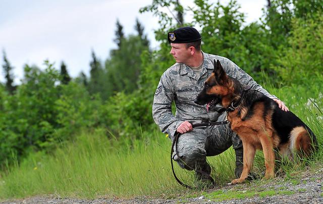 Image Result For Dog Training Fort