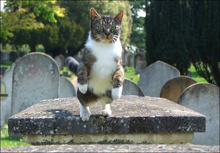 the cemetery cat | by Simon_K