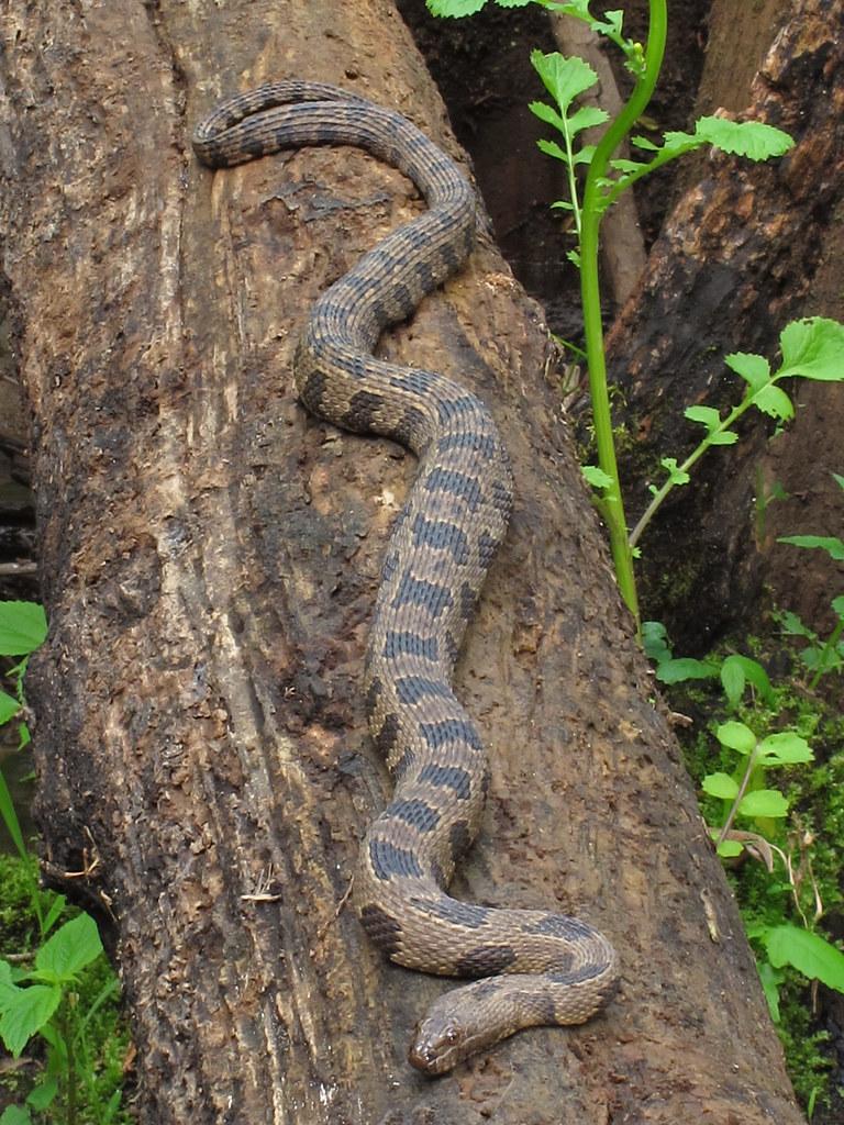 Company of snakes | lifeproof iphone6 発売日