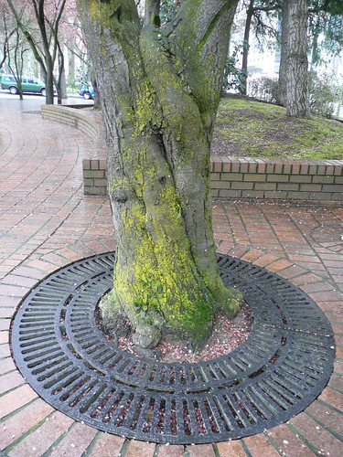 Portland has mossy trees. | by finslippy