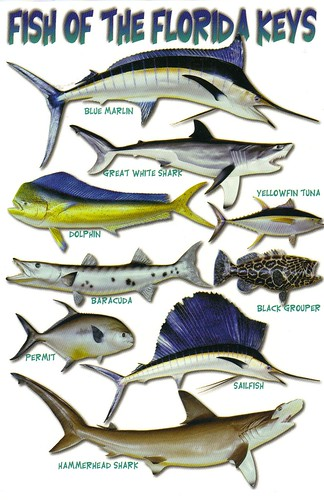 Florida keys fish postcard special trades only flickr for Florida fishing license lookup