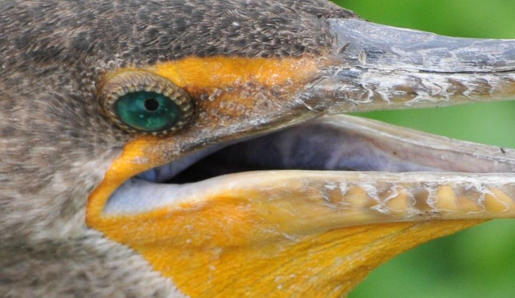 Got fish crazy fish eye wordrot flickr for Crazy fishing vr