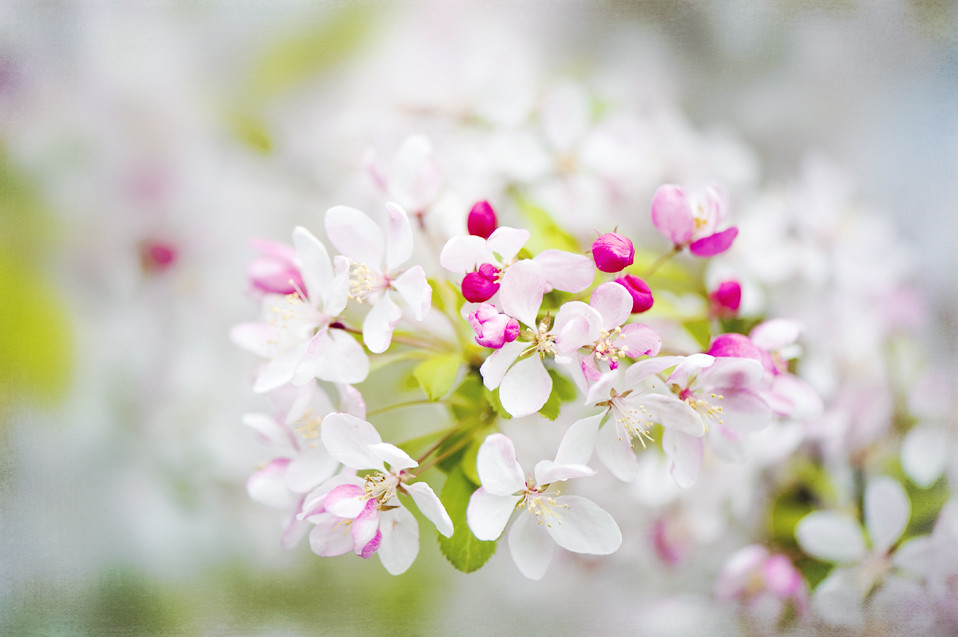 Photograph Spring Dreams by Jacky Parker