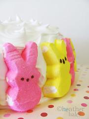 bunny goodness