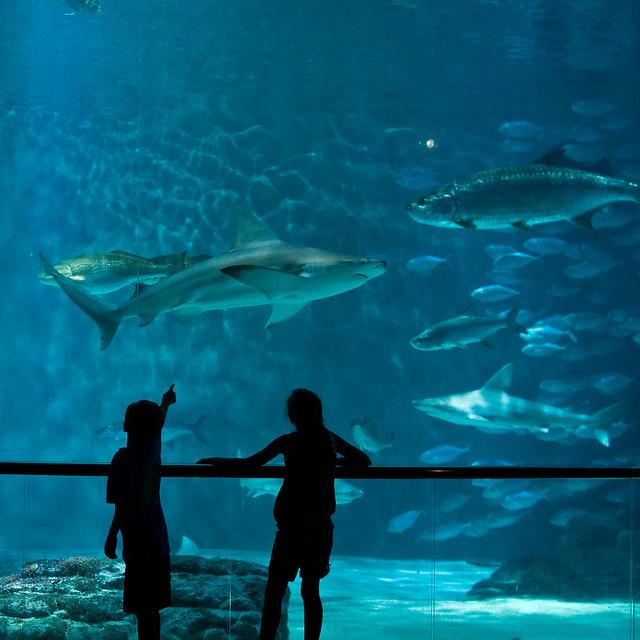 Image Result For Audubon Aquarium