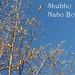 NaboBorsho1