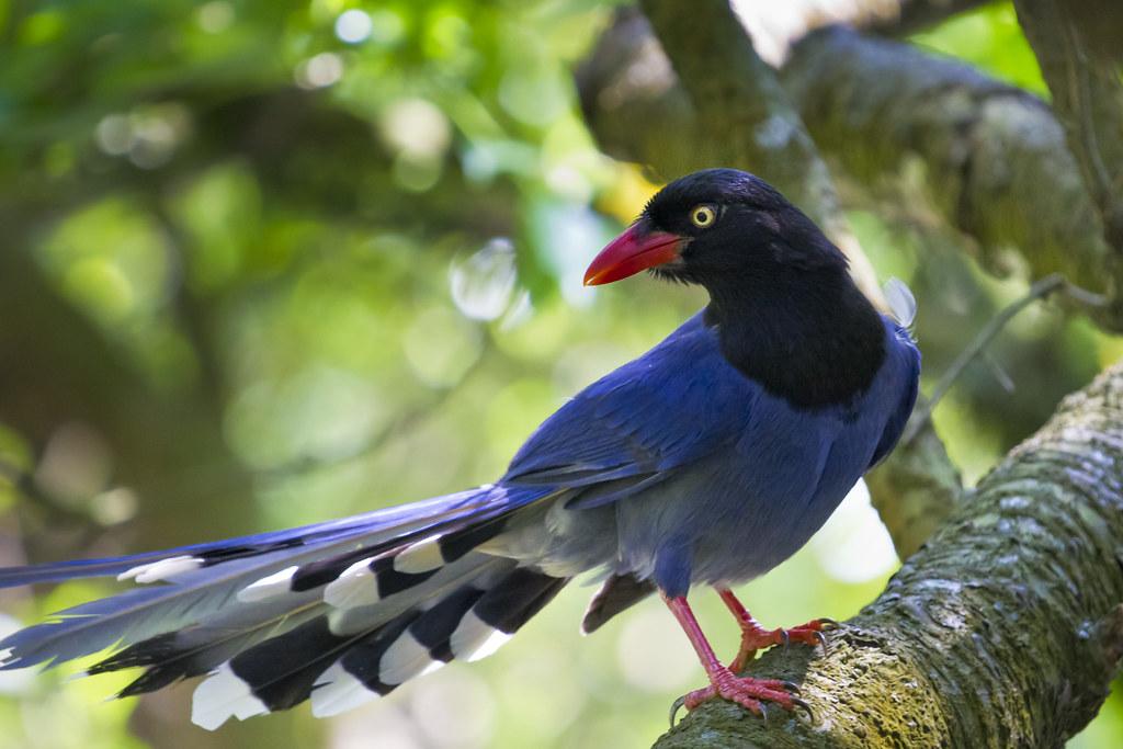 The bird of pleasure 5 - 2 5