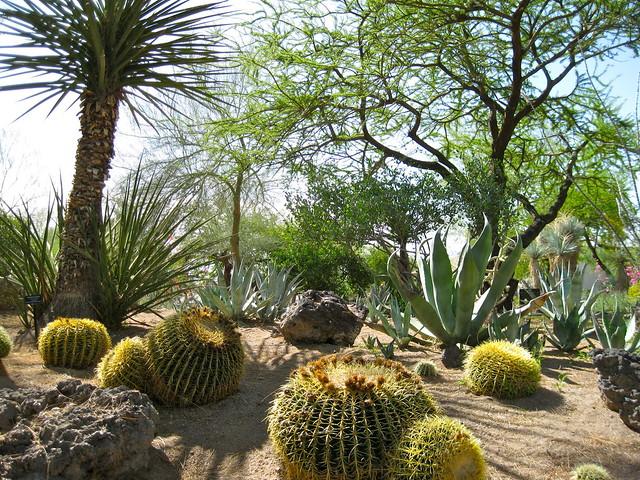 Botanical Cactus Garden Flickr Photo Sharing