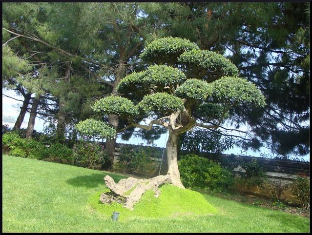Photo for Jardin japonais monaco