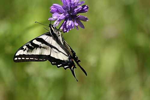 1swallowtail dave harper oakley | by Contra Costa Times