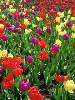 Gardening Trends For Topeka Shawnee County Public Library