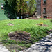 South End Earth Day 2011 - Albany, NY - 2011, Apr - 48.jpg